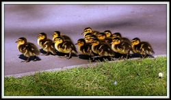 Follow the leader, by The old Brit