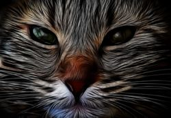 Fractalius Kitty Kitty, by peasap