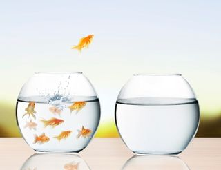 7250888_goldfish