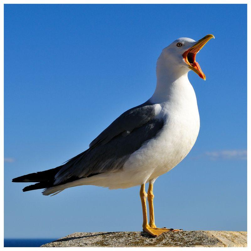 Seagullb