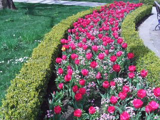 VancouverBC TrainSta Tulips