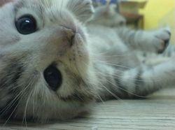 Falling Down Cat  by Celine. Q