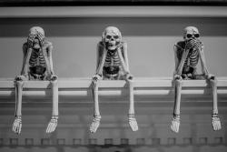 Skeletons  by Chris Charles